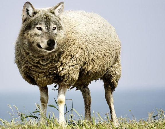Over the Counter Diet Pills Wolf in Sheep's Clothing